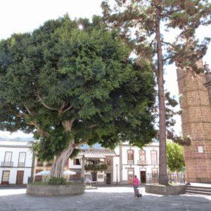 Villa Mariana de Teror1
