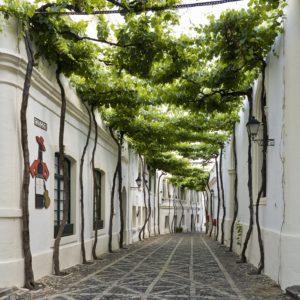 Calle de los Ciegos2