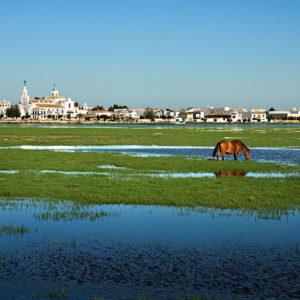 Parque Nacional de Doñana1