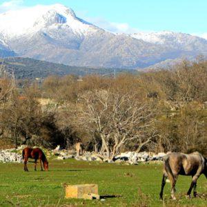 Parque Nacional de la Sierra de Guadarrama2