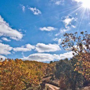 Sierra de Aracena y Picos de Aroche2